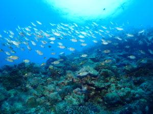 魚影の多さとアクセスの良さが魅力の糸満